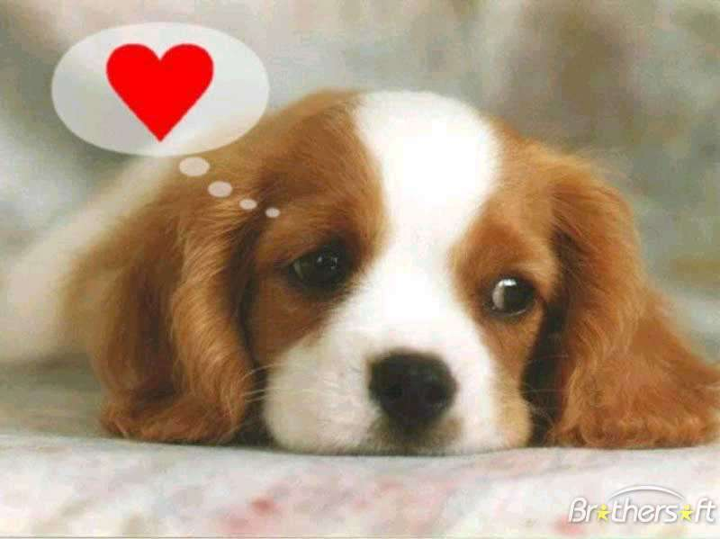 love sick puppy meaning